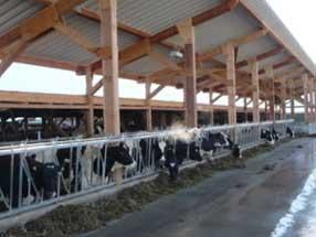 Gewerbebau - Landwirtschaft - Stall bauen